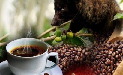 ,PLANTATION, LUWAK, COFFEE, AGROTOURISM
