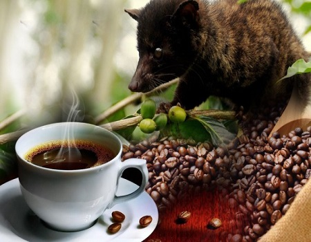 ,PLANTATION, LUWAK, COFFEE, AGROTOURISM