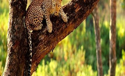 BALI SAFARI AND LEOPARD PACKAGE 2.2
