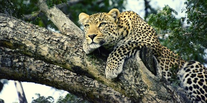 BALI SAFARI AND LEOPARD PACKAGE TOUR
