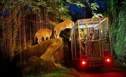 BALI NIGHT SAFARI AT BALI SAFARI AND MARINE PARK