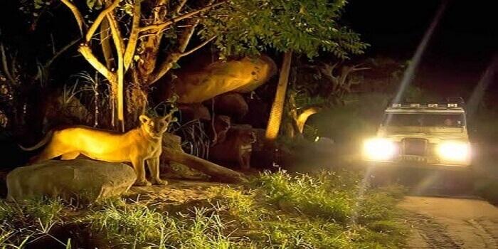 Night Safari 4